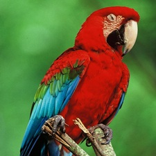 Shop for a Macaw Bird Cage